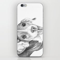 A Story To Tell :: A Beagle Puppy iPhone & iPod Skin