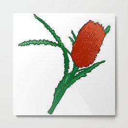 Banksia Illustration - Australian Native Florals Metal Print