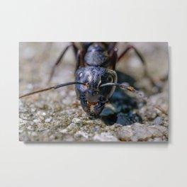 Happy Ant. Macro Photograph Metal Print