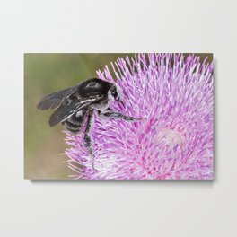 Bumblebee on Thistle Flower 02 Metal Print