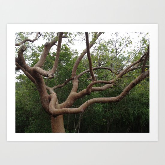 Tropical Tree, Turpentine, St. John, USVI Art Print