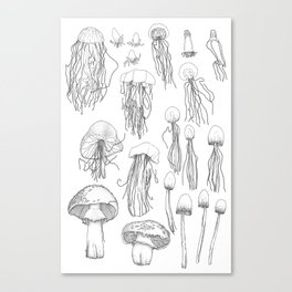 Transitioning Mushrooms Canvas Print