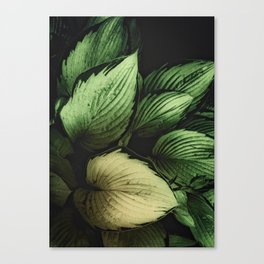 Vintage Japanese Hosta Canvas Print