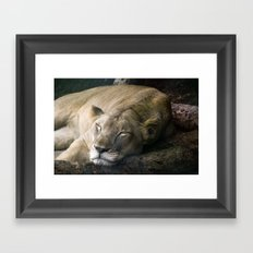 Cat nap II Framed Art Print