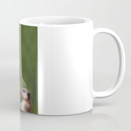 Meerkat Mob Coffee Mug