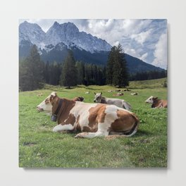 Cows in the Alps Metal Print