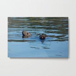 Seals Photography Print Metal Print