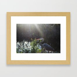 Great Blue Heron in the Eveglades Framed Art Print