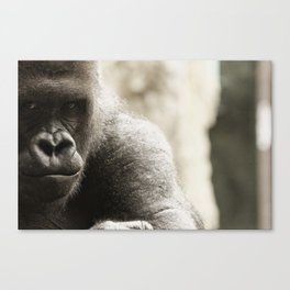 Koga, Intimidation Canvas Print