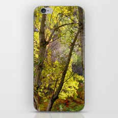 bright leaves in dense forest iPhone & iPod Skin