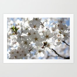 Blooming for Spring Art Print