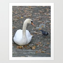 Swan and Jackdaw Art Print