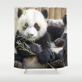Super Dainty Small Young Panda Eating Eucalyptus Leafs Ultra High Resolution Shower Curtain