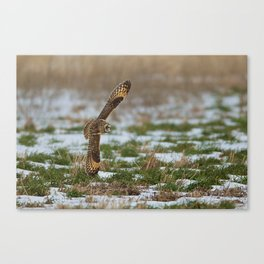 BIG WINGS Short Eared Owl Canvas Print
