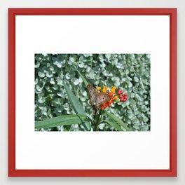 Butterfly Flower Framed Art Print