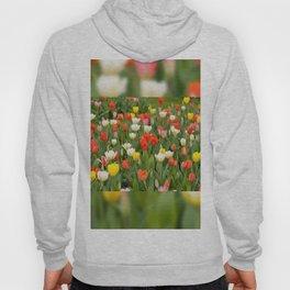Plenty tulips mix grow in garden Hoody