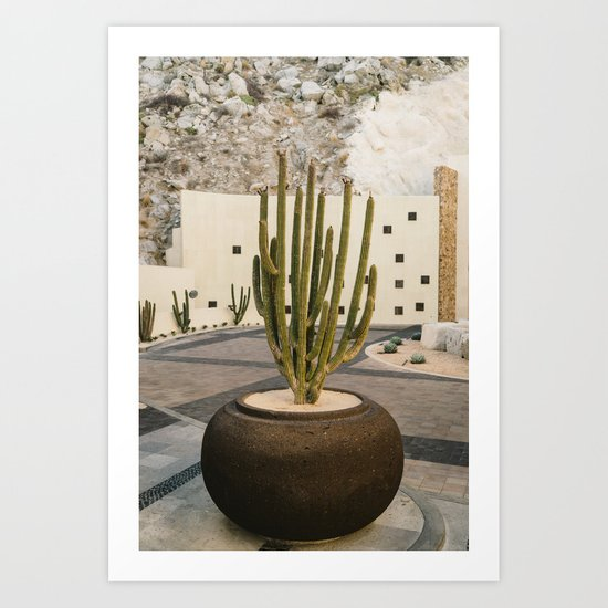 Cabo Cactus VIII Art Print