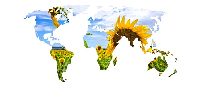 World of Sunflowers Coffee Mug