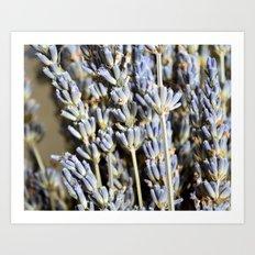 Sweet Lavender Bunch Art Print