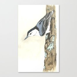 White-Breasted Nuthatch - Watercolor Canvas Print