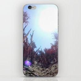 Ancient bristlecone pine forest iPhone Skin