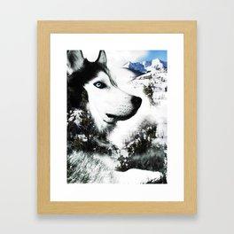 The Husky's Mountain Gaze by Vince Bongiovanni Framed Art Print