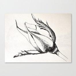 rosebud drawing Canvas Print
