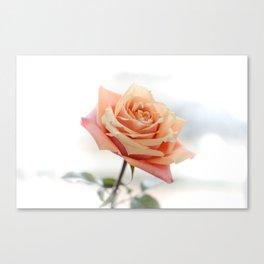 Peach Rose bloom Canvas Print