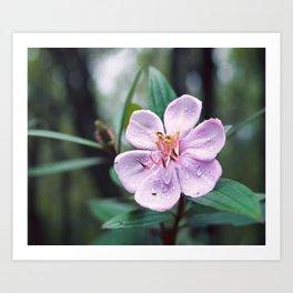 Mountain forest flower Art Print