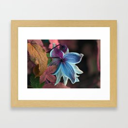 Purple Clematis Framed Art Print