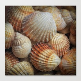 A collection of sea shells Canvas Print