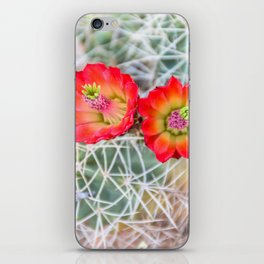 Mojave Mound Cactus Flowers iPhone Skin