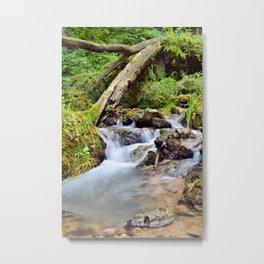 Mossy Glen Hollow Metal Print