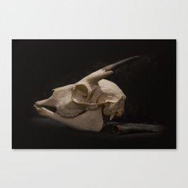 White Tail Deer Skull Canvas Print
