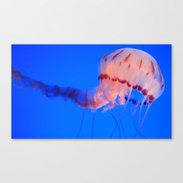 jelly rising Canvas Print