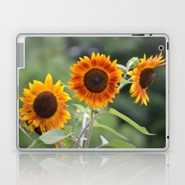 Mexican Sunflowers Laptop & iPad Skin