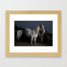 DARTMOOR PONYS FLASHED2 Framed Art Print