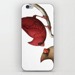 Northern Cardinals iPhone Skin