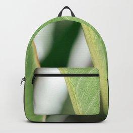 Green art print I Botanical photography print I Curacao nature fine art printI Palm plantI Backpack