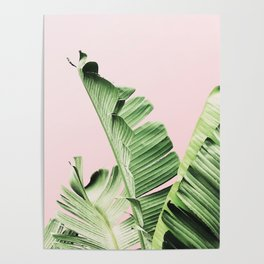 Banana Leaf on pink Poster