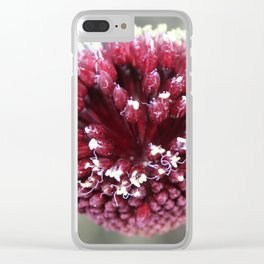 Macro of Round-Headed Leek Flower Allium Sphaerocephalon Clear iPhone Case