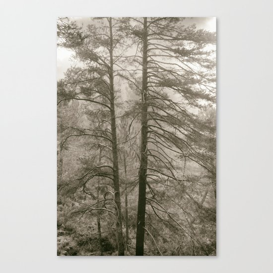 """""""Forest arms"""". Into the woods Canvas Print"""