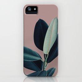 Ficus elastica - berry iPhone Case