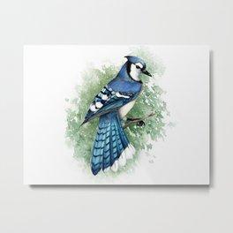 Blue Jay In Watercolor Metal Print