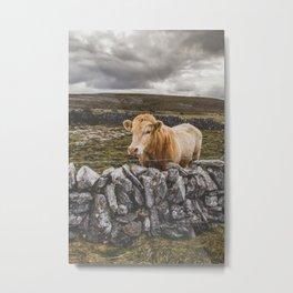 Burren Cow Metal Print