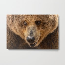Brown Bear Portrait Metal Print