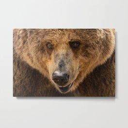 Brown Bear Portrait Metal Print