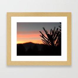 Sunset and Pine Framed Art Print