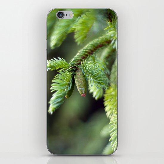 Baby Pine Cone iPhone Skin