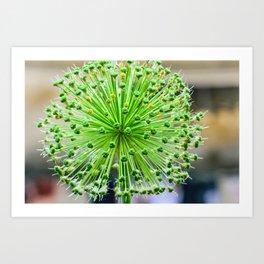 Spiky Ball Art Print